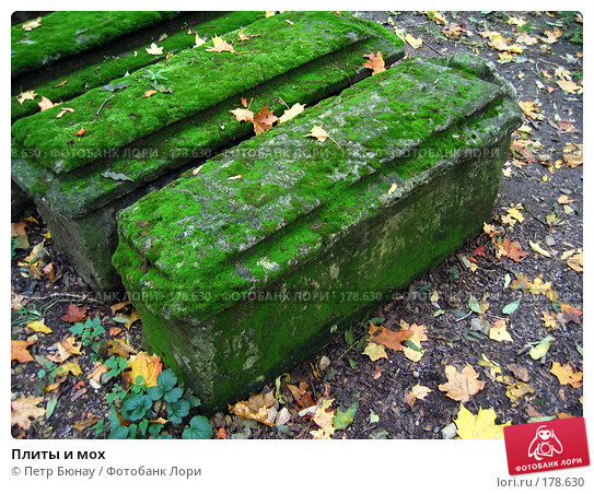 Плиты и мох, фото № 178630, снято 27 сентября 2003 г. (c) Петр Бюнау / Фотобанк Лори