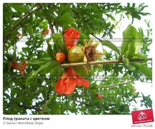 Плод граната с цветком, фото № 75678, снято 19 мая 2007 г. (c) Sanna / Фотобанк Лори
