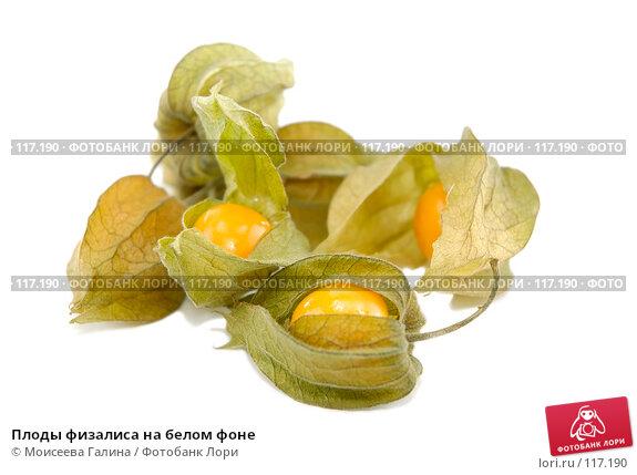 Плоды физалиса на белом фоне, фото № 117190, снято 14 октября 2007 г. (c) Моисеева Галина / Фотобанк Лори