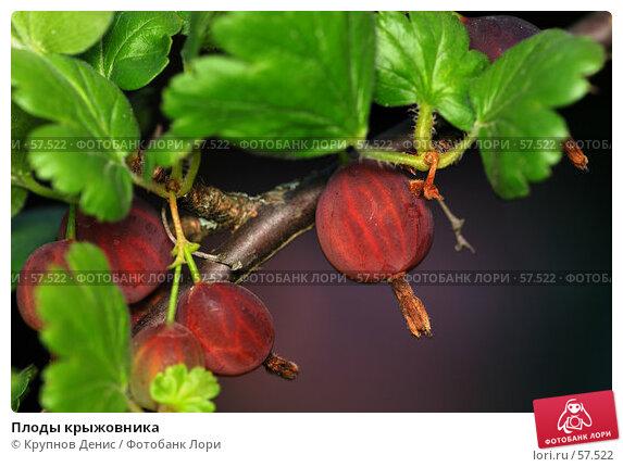 Купить «Плоды крыжовника», фото № 57522, снято 30 мая 2007 г. (c) Крупнов Денис / Фотобанк Лори