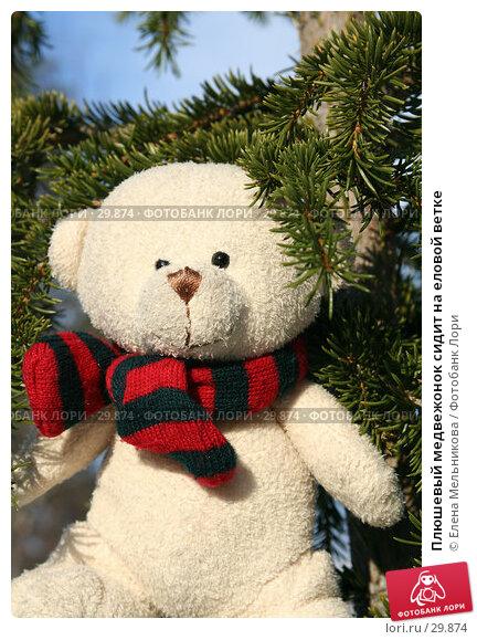 Плюшевый медвежонок сидит на еловой ветке, фото № 29874, снято 28 марта 2007 г. (c) Елена Мельникова / Фотобанк Лори