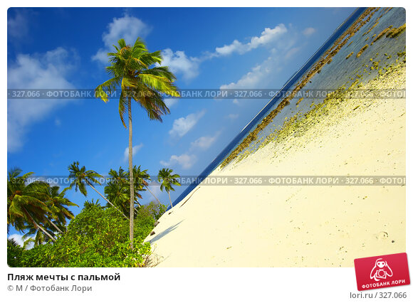 Купить «Пляж мечты с пальмой», фото № 327066, снято 27 апреля 2018 г. (c) М / Фотобанк Лори