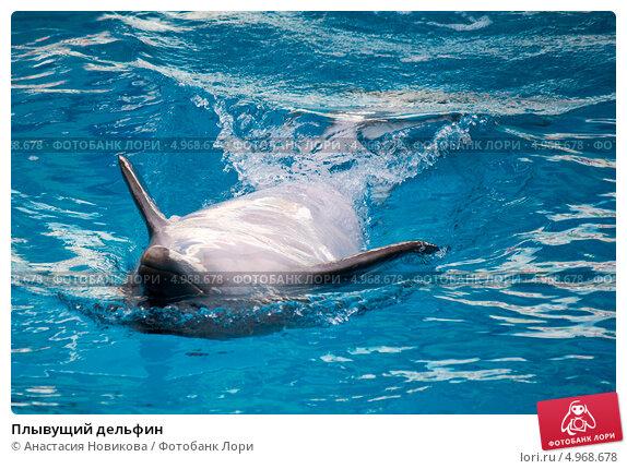 Плывущий дельфин. Стоковое фото, фотограф Анастасия Новикова / Фотобанк Лори