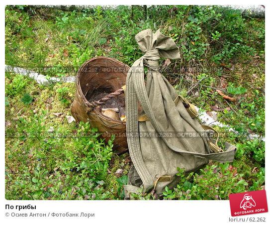 По грибы, фото № 62262, снято 10 июля 2007 г. (c) Осиев Антон / Фотобанк Лори