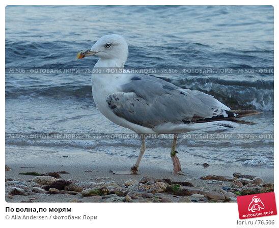 По волна,по морям, фото № 76506, снято 18 августа 2006 г. (c) Alla Andersen / Фотобанк Лори