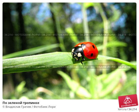 По зеленой тропинке, фото № 34214, снято 24 июля 2004 г. (c) Владислав Грачев / Фотобанк Лори