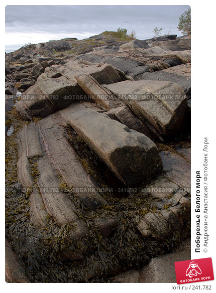 Побережье Белого моря, фото № 241782, снято 24 сентября 2007 г. (c) Андрюхина Анастасия / Фотобанк Лори