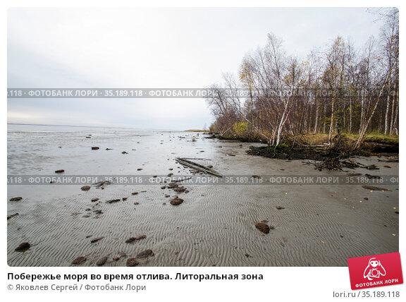 Побережье моря во время отлива. Литоральная зона. Стоковое фото, фотограф Яковлев Сергей / Фотобанк Лори
