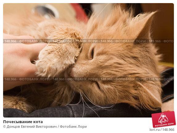 Почесывание кота, фото № 148966, снято 2 декабря 2007 г. (c) Донцов Евгений Викторович / Фотобанк Лори
