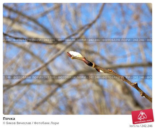 Почка, фото № 242246, снято 22 марта 2008 г. (c) Бяков Вячеслав / Фотобанк Лори