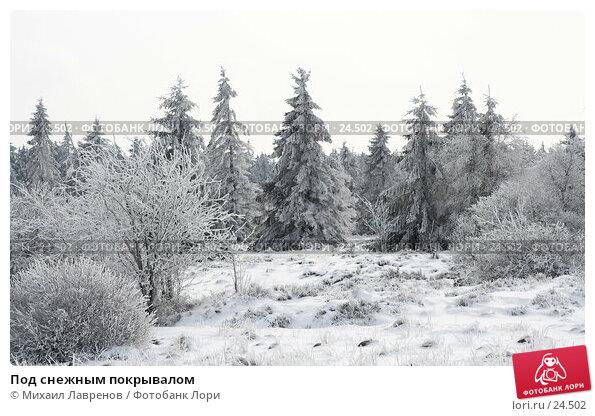 Под снежным покрывалом, фото № 24502, снято 12 февраля 2006 г. (c) Михаил Лавренов / Фотобанк Лори