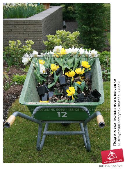 Подготовка тюльпанов к высадке, фото № 183126, снято 11 апреля 2007 г. (c) Demyanyuk Kateryna / Фотобанк Лори