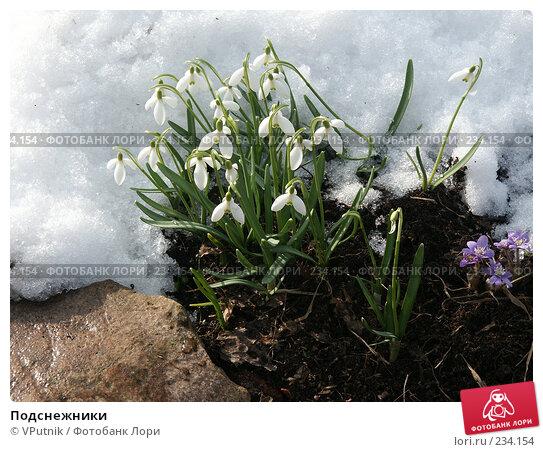 Подснежники, фото № 234154, снято 13 апреля 2005 г. (c) VPutnik / Фотобанк Лори