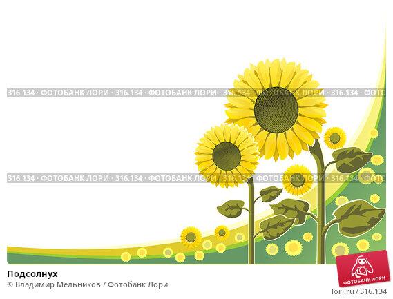 Подсолнух, иллюстрация № 316134 (c) Владимир Мельников / Фотобанк Лори
