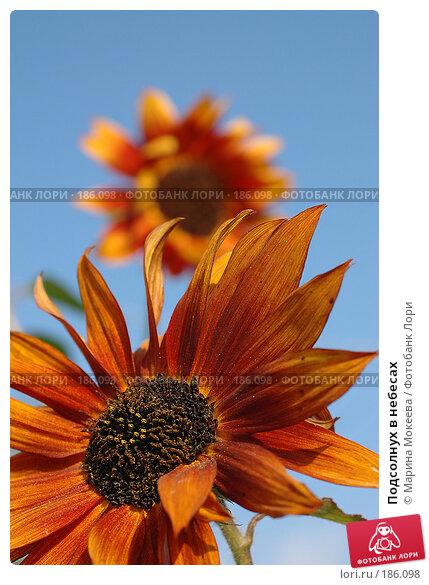 Подсолнух в небесах, фото № 186098, снято 23 сентября 2006 г. (c) Марина Мокеева / Фотобанк Лори