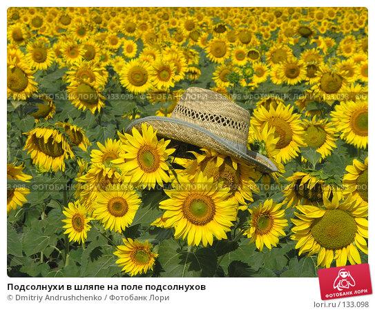 Купить «Подсолнухи в шляпе на поле подсолнухов», фото № 133098, снято 28 июля 2007 г. (c) Dmitriy Andrushchenko / Фотобанк Лори