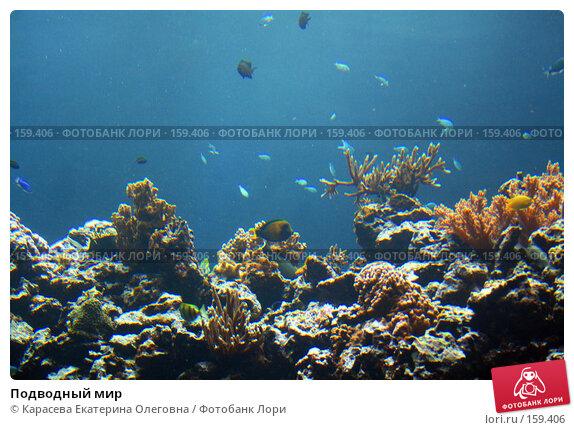 Подводный мир, фото № 159406, снято 17 августа 2007 г. (c) Карасева Екатерина Олеговна / Фотобанк Лори