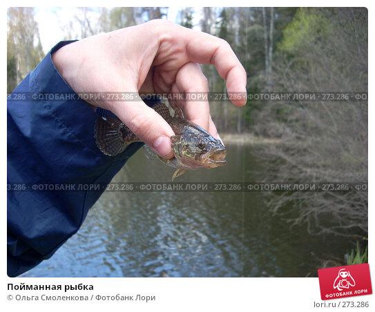 Пойманная рыбка, фото № 273286, снято 27 апреля 2008 г. (c) Ольга Смоленкова / Фотобанк Лори