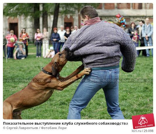 Показательное выступление клуба служебного собаководства, фото № 29098, снято 8 мая 2004 г. (c) Сергей Лаврентьев / Фотобанк Лори