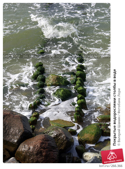 Покрытые водорослями столбы в воде, фото № 266366, снято 29 июля 2007 г. (c) Валерий Шанин / Фотобанк Лори