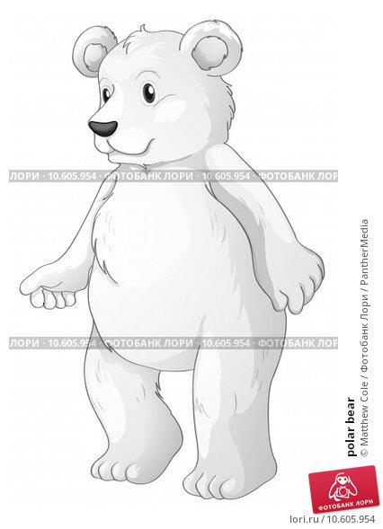 polar bear. Стоковая иллюстрация, иллюстратор Matthew Cole / PantherMedia / Фотобанк Лори