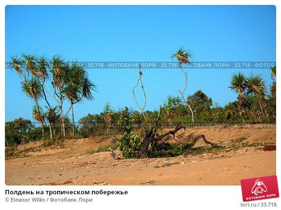 Купить «Полдень на тропическом побережье», фото № 33718, снято 31 декабря 2006 г. (c) Eleanor Wilks / Фотобанк Лори