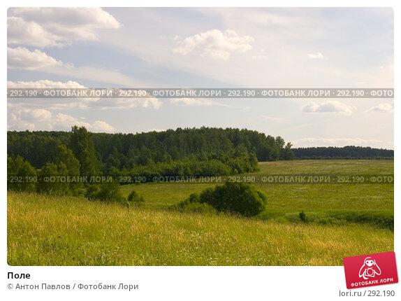 Купить «Поле», фото № 292190, снято 24 июня 2007 г. (c) Антон Павлов / Фотобанк Лори
