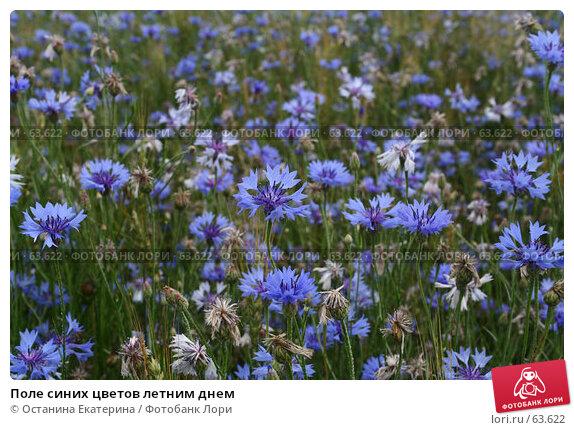 Поле синих цветов летним днем, фото № 63622, снято 12 июля 2007 г. (c) Останина Екатерина / Фотобанк Лори