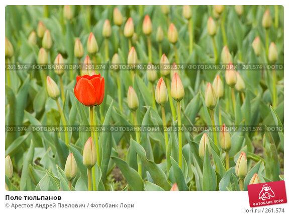 Купить «Поле тюльпанов», фото № 261574, снято 11 апреля 2008 г. (c) Арестов Андрей Павлович / Фотобанк Лори