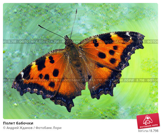 Полет бабочки , фото № 8798, снято 24 марта 2017 г. (c) Андрей Жданов / Фотобанк Лори