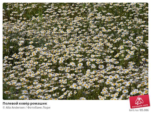 Полевой ковёр ромашек, фото № 85086, снято 13 мая 2007 г. (c) Alla Andersen / Фотобанк Лори