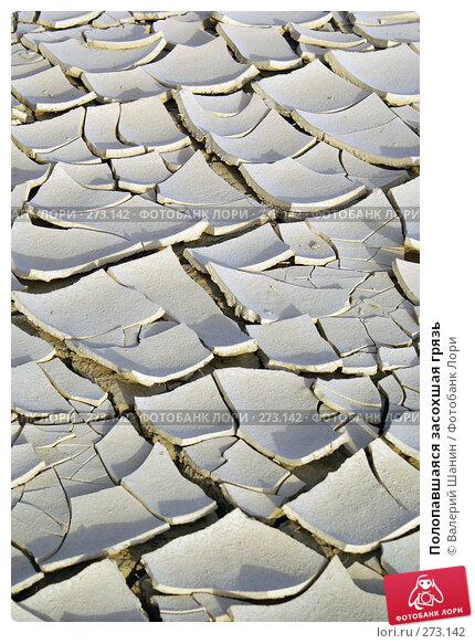 Полопавшаяся засохшая грязь, фото № 273142, снято 28 ноября 2007 г. (c) Валерий Шанин / Фотобанк Лори