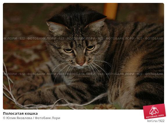 Полосатая кошка, фото № 922, снято 13 февраля 2006 г. (c) Юлия Яковлева / Фотобанк Лори