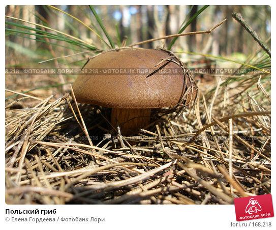 Польский гриб, фото № 168218, снято 17 сентября 2006 г. (c) Елена Гордеева / Фотобанк Лори
