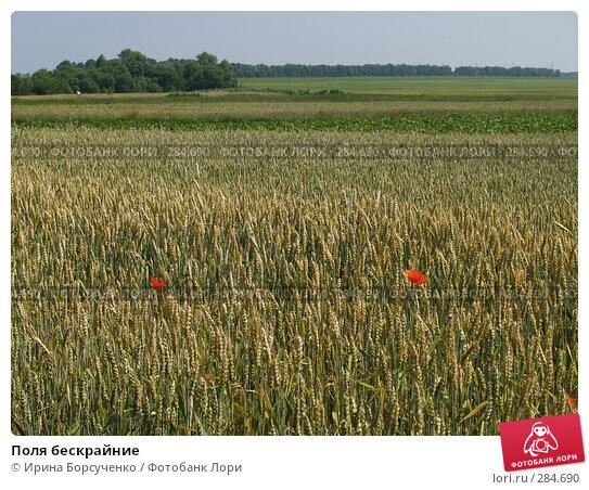 Поля бескрайние, фото № 284690, снято 17 июня 2007 г. (c) Ирина Борсученко / Фотобанк Лори