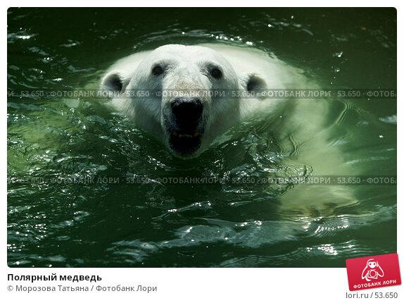 Полярный медведь, фото № 53650, снято 9 июля 2005 г. (c) Морозова Татьяна / Фотобанк Лори