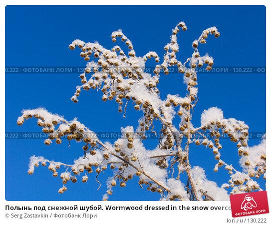 Полынь под снежной шубой. Wormwood dressed in the snow overcoat, фото № 130222, снято 18 декабря 2005 г. (c) Serg Zastavkin / Фотобанк Лори