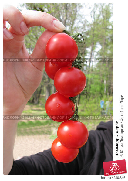 Купить «Помидоры черри», фото № 280846, снято 10 мая 2008 г. (c) Юлия Селезнева / Фотобанк Лори