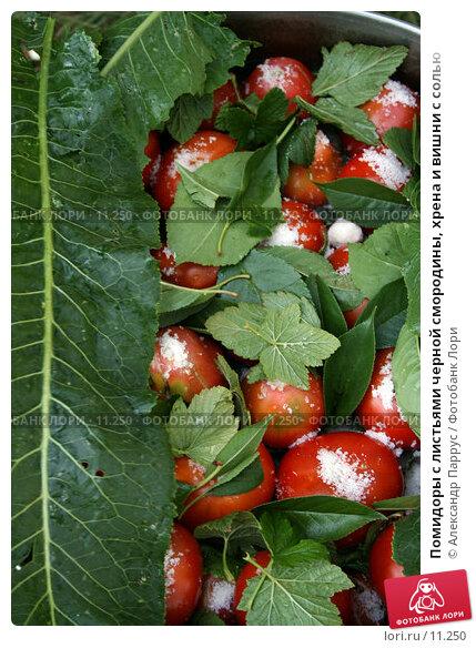 Помидоры с листьями черной смородины, хрена и вишни с солью, фото № 11250, снято 27 августа 2006 г. (c) Александр Паррус / Фотобанк Лори