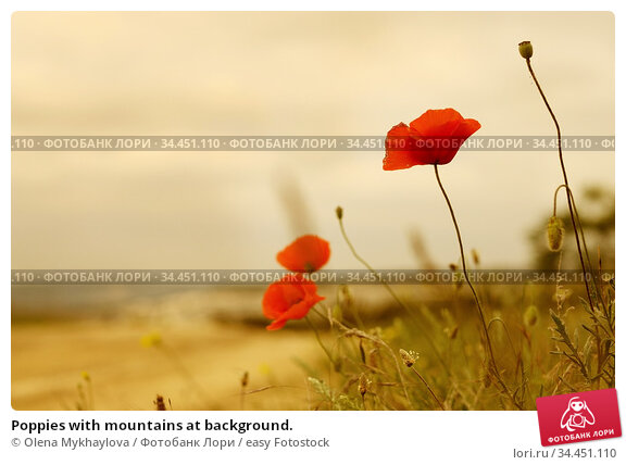 Poppies with mountains at background. Стоковое фото, фотограф Olena Mykhaylova / easy Fotostock / Фотобанк Лори