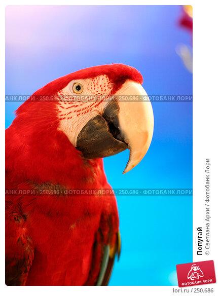 Попугай, фото № 250686, снято 13 апреля 2008 г. (c) Светлана Архи / Фотобанк Лори