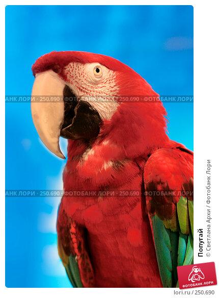 Попугай, фото № 250690, снято 13 апреля 2008 г. (c) Светлана Архи / Фотобанк Лори