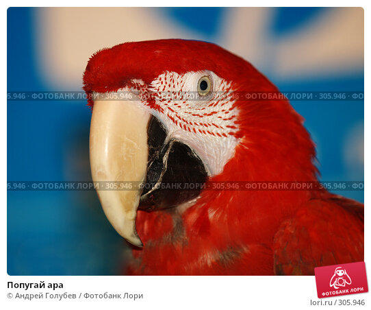 Попугай ара, фото № 305946, снято 12 апреля 2008 г. (c) Андрей Голубев / Фотобанк Лори