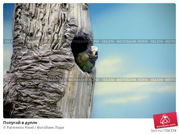 Попугай в дупле, фото № 154574, снято 11 декабря 2007 г. (c) Parmenov Pavel / Фотобанк Лори