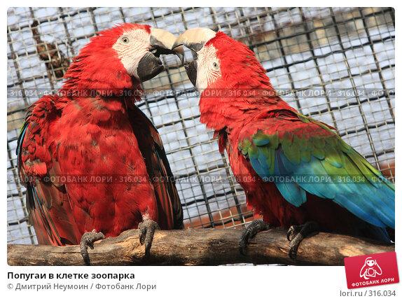 Купить «Попугаи в клетке зоопарка», эксклюзивное фото № 316034, снято 28 апреля 2008 г. (c) Дмитрий Неумоин / Фотобанк Лори