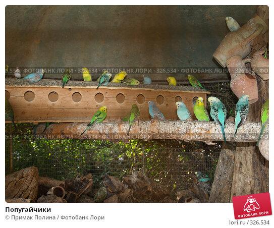 Попугайчики, фото № 326534, снято 10 сентября 2006 г. (c) Примак Полина / Фотобанк Лори