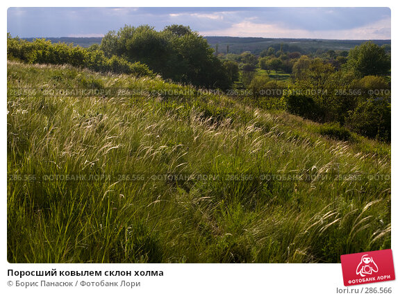 Поросший ковылем склон холма, фото № 286566, снято 8 мая 2008 г. (c) Борис Панасюк / Фотобанк Лори