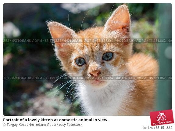 Portrait of a lovely kitten as domestic animal in view. Стоковое фото, фотограф Turgay Koca / easy Fotostock / Фотобанк Лори