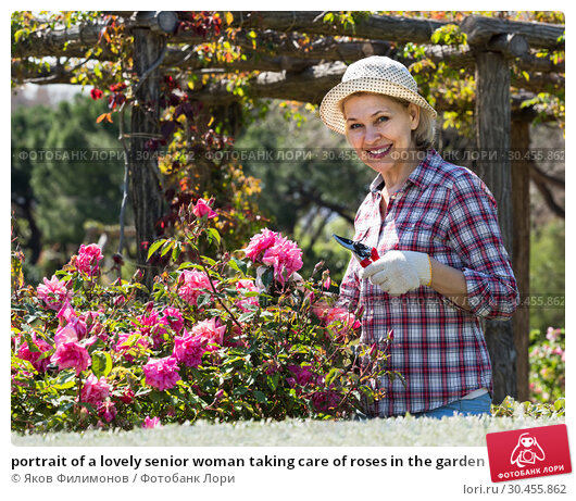 portrait of a lovely senior woman taking care of roses in the garden. Стоковое фото, фотограф Яков Филимонов / Фотобанк Лори