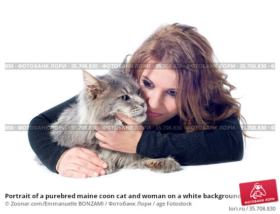 Portrait of a purebred maine coon cat and woman on a white background. Стоковое фото, фотограф Zoonar.com/Emmanuelle BONZAMI / age Fotostock / Фотобанк Лори